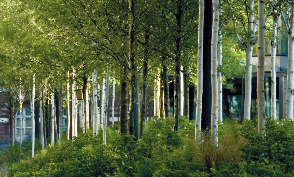 Landscapes at NEO Bankside